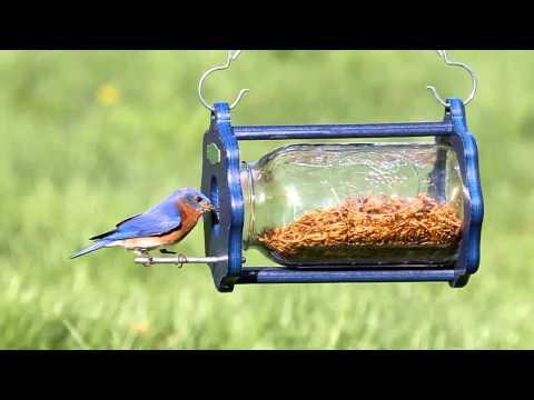 Duncraft Bug a View Jar Bluebird Feeder 4346