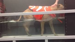 Lucy Bagford Underwater Treadmill