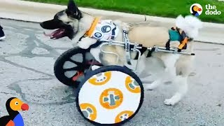 Star Wars Pets: Dog Gets Star Wars Themed Wheelchair & More Pet Heroes  | The Dodo Episode Top 5