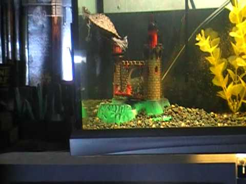 An update on my Ouachita Map Turtle set up. I replaced the large Turtle dock