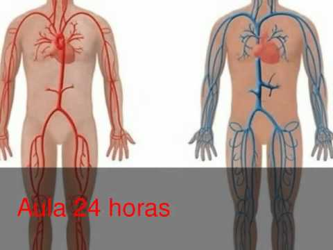 Anatom a del cuerpo humano youtube for Interior del cuerpo humano