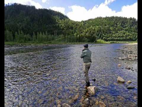 Norwegian Flyfishers Club - Fly-fishing on the Gaula