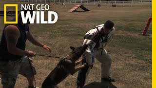 Decoy Technique | Alpha Dogs