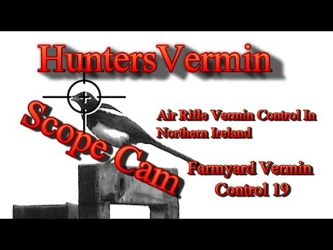 Air Rifle Hunting. Scope Cam Farmyard Vermin Control Jan 2014