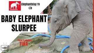 What does a baby elephant slurpee sound like? | Elephantstay