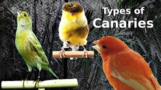 Types of Canaries