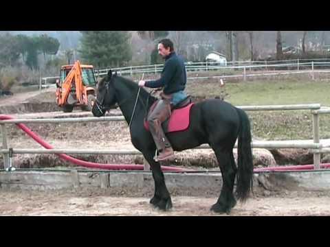 Equitazione Classica Dressage – Francesco Vedani – Educazione alla gamba 2
