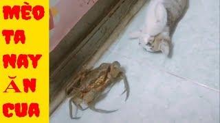 Những Tình Huống Hài Hước Đáng Yêu Của Thú Cưng - Cố Lên Mèo Ơi