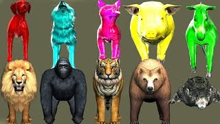 wild animals finger family song for kids | nursery rhymes,children,toddlers,Gorilla,NASH TOON Tv