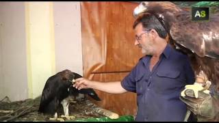 The Mechanic - AS A car mechanic who is also a falconry amateur has achieved to breed golden eagles in captivity