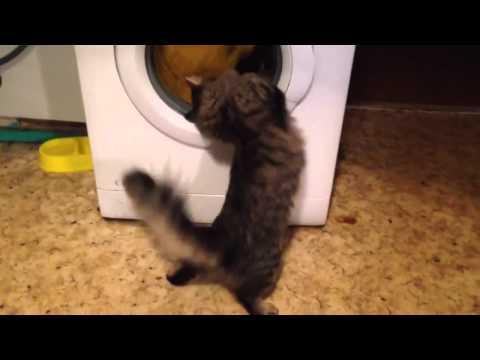 Rnkrn я люблю тебя моя кошка скачать песню