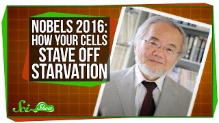 Video: How Fasting helps Blood Cells stave off Starvation - Nobel Prize 2016 - Yoshinori Ohsumi