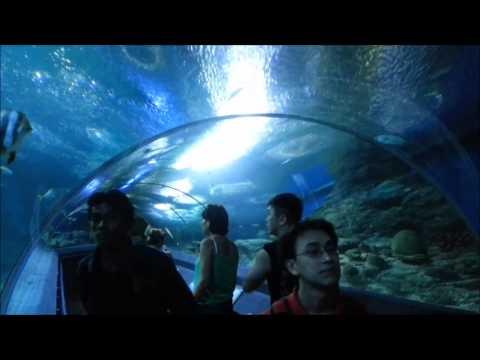 Наша прогулка по Underwater World Pattaya