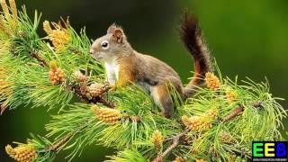 Tiếng kêu động vật sống trong rừng  Bé học tiếng anh động vật sống trong rừng Giáo dục sớm cho trẻ