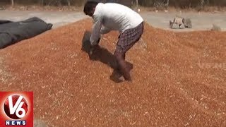 Special Report On Pigeon Pea Farmers Problems In Rajanna Sircilla District