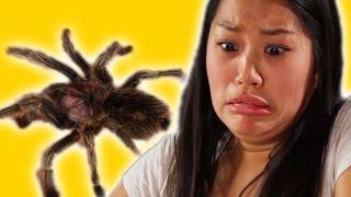 Arachnophobes Meet Spiders
