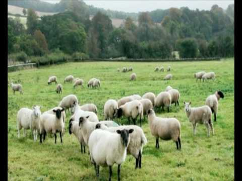 The Sheepdogs by Russ Vaughn Video