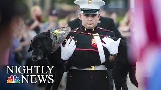 U.S. Marines Pay Tribute To Ailing Military Dog | NBC Nightly News