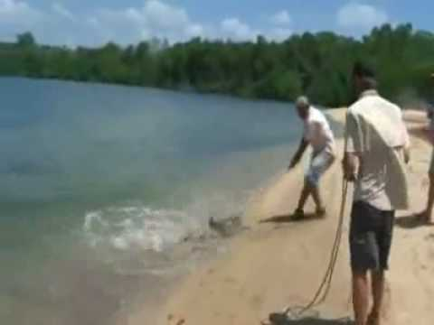 Shark Caught on Fishing Line...But That's Not the Crazy Part
