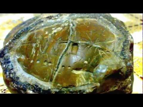 Alien Star Map Found In Kupang, Indonesia? 2013 1080p HD