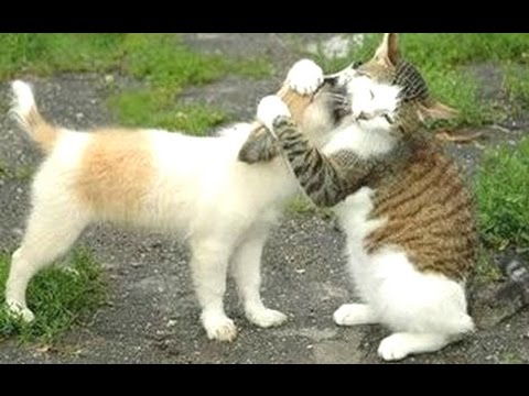 funny cats meeting cute puppies compilation new   youtube