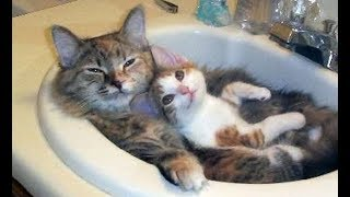 DON'T miss THE FUNNIEST VIDEOS EVER! - Funny CAT compilation