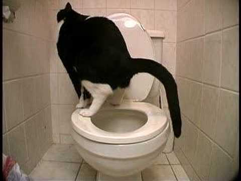 Toilet Trained Cat Doing Number 2