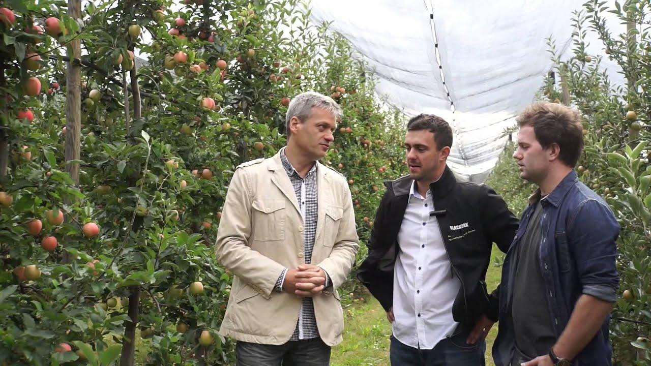 uprawa jabłek, wybarwienie owoców, forum sadownicze, ochrona przed suszą
