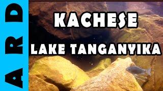 Kachese - Lake Tanganyika