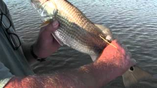Redfish Bonanza