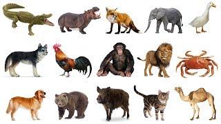 Dạy bé học các con vật qua hình ảnh