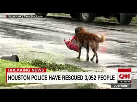 Photo of dog carrying bag of food in flood goes viral