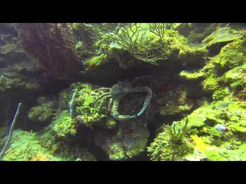Bananarama Roatan pics, dive video with Hero3