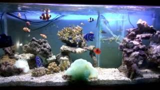 Ikan hias laut bengkulu