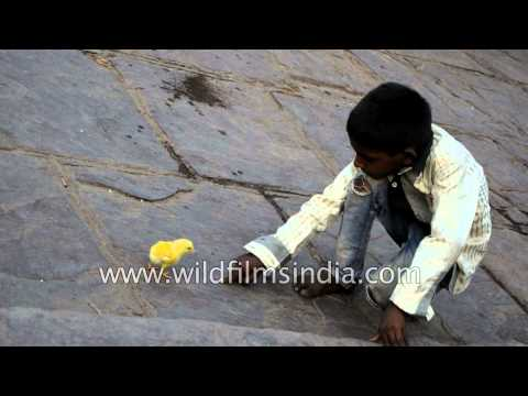 Poor ragpicker plays with small baby chick - Delhi