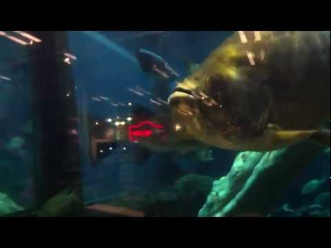 BassPro Orlando Fish Tank