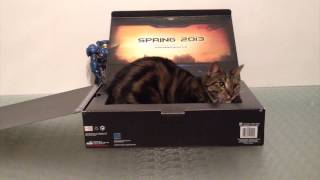 Cat in battlecruiser box \ Кот в коробке