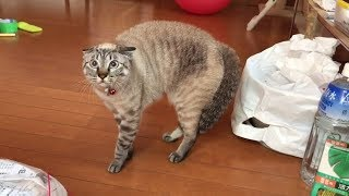 Crazy Cats That Make You LAUGH Until You Crazy - Funny Meow Meow #14
