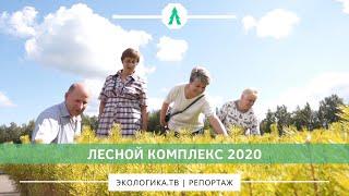 Лесной комплекс-2020