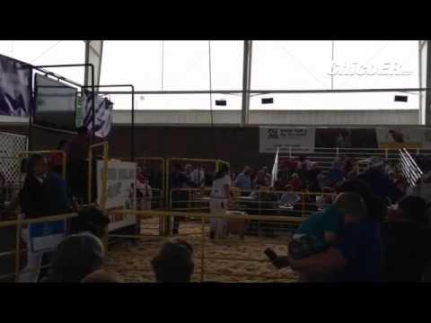 Jr Livestock auction @SilverFair #chico