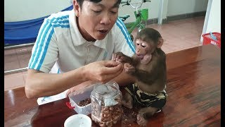 Baby Monkey | Monkey Doo Eats Roasted Cashew Nuts With His Daddy