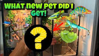 My NEW MYSTERY PET!! *Crazy*