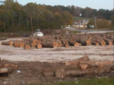 North of Loogootee, Tome sees lumber trucks, spots logs piled in lot at an intersection, stops, takes pics and videos large logs, evidence of a big trade in ...