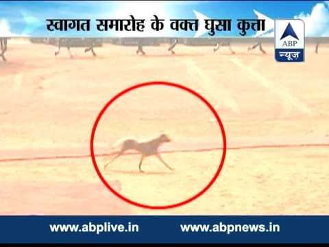Security Violation: A mongrel spotted at Rashtrapati Bhavan during Gua...