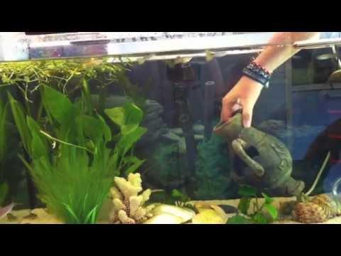 anleitung putzen und reinigen vom aquarium wasserbecken s ubern youtube. Black Bedroom Furniture Sets. Home Design Ideas
