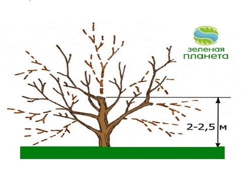 Уход за молодыми и старыми деревьями в саду – в чем разница и отличия