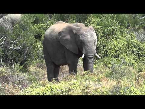 Rondreis Zuid Afrika Compilatie film