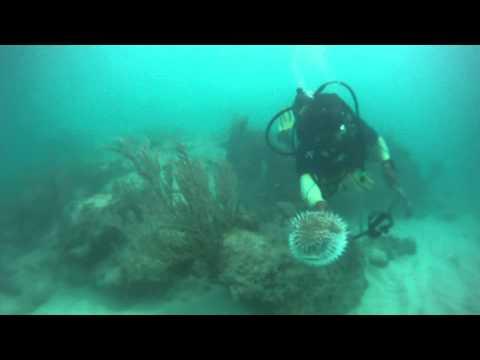 Scuba Diving - Punta Cana - Sea Urchin