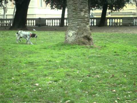 caccia al piccione - Roma