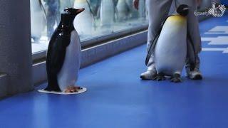 AWS 帰りたくないと駄々をこねるキングペンギン